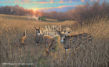 Harvest Time Whitetail Deer Canvas Giclee Art Print Wall Art