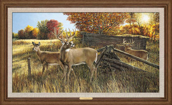 The Waiting Game Whitetail Deer Framed Canvas Giclee Art Print