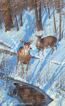 Shadows of Bowhunting Whitetail Deer Art Print Wall Art