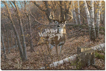 Great Eight Whitetail Deer Wrapped Canvas Giclee Print Wall Art