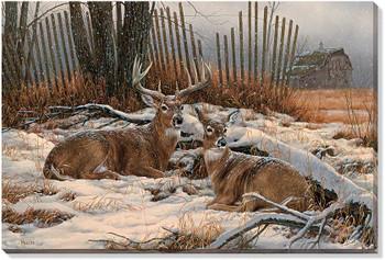Windbreak Refuge Whitetail Deer Wrapped Canvas Giclee Print