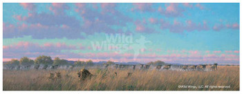 Well Fed Lions Canvas Giclee Art Print Wall Art