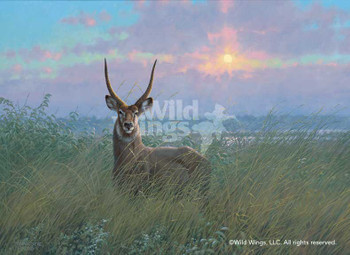 At Home Waterbuck Canvas Giclee Art Print Wall Art