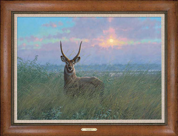 At Home Waterbuck Framed Canvas Giclee Art Print Wall Art