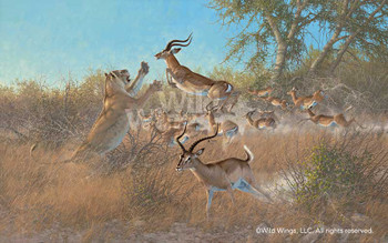 Quick and Easy Lions and Impalas Canvas Giclee Art Print Wall Art