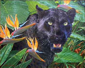 Trouble in Paradise Black Leopard Canvas Giclee Art Print Wall Art