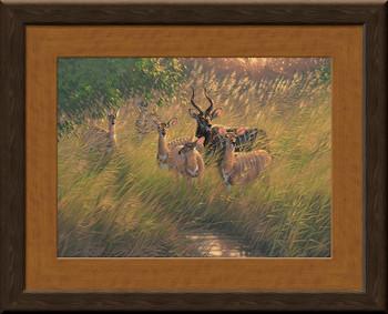 Nyala Antelopes Framed Canvas Giclee Art Print Wall Art