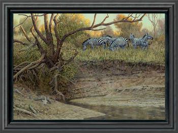 Cutbank Zebras Framed Canvas Giclee Art Print Wall Art
