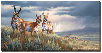 Approaching The Storm Pronghorns Wrapped Canvas Giclee Print