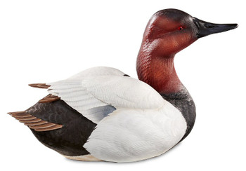 Alert Canvasback Hand Painted Duck Decoy Sculpture by Sam Nottleman