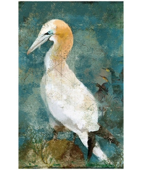 Custom Gannet Seabird Vintage Style Metal Sign