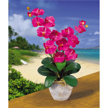 Double Stem Phalaenopsis Silk Orchids - Beauty