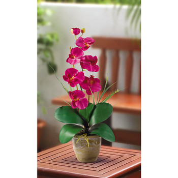 Single Stem Phalaenopsis Silk Orchids - Beauty