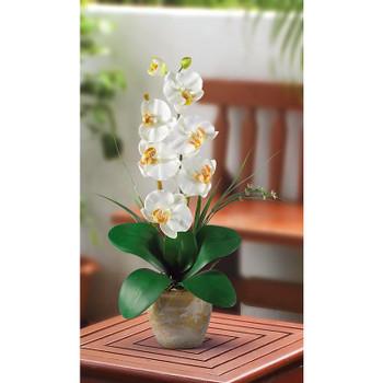 Single Stem Phalaenopsis Silk Orchids - Cream
