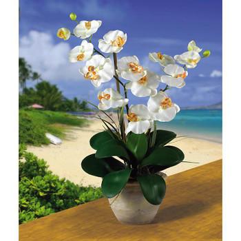 Double Stem Phalaenopsis Silk Orchids - Cream