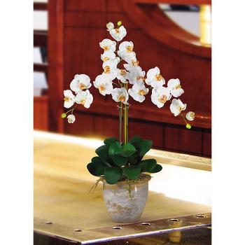 Triple Stem Phalaenopsis Silk Orchids - Cream