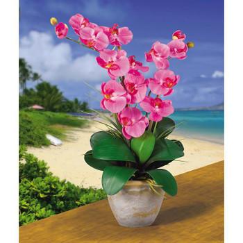 Double Stem Phalaenopsis Silk Orchids - Dark Pink