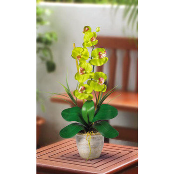 Single Stem Phalaenopsis Silk Orchids - Green