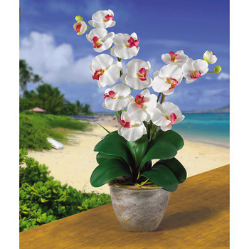 Double Stem Phalaenopsis Silk Orchids - White