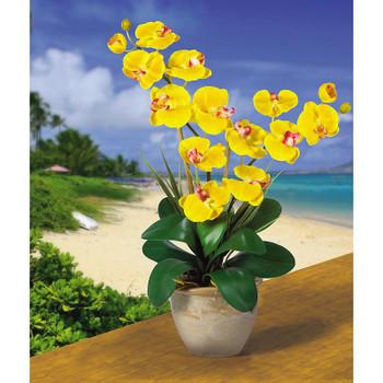 Double Stem Phalaenopsis Silk Orchids - Gold