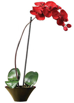 Holiday Phalaenopsis Orchid Arrangement