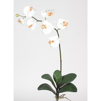 Phalaenopsis Silk Orchid Flowers (6 Stems) - Cream