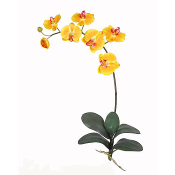 Phalaenopsis Silk Orchid Flowers (6 Stems) - Gold/Yellow