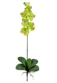 Phalaenopsis Silk Orchid Flower Stems - Green, Set of 12