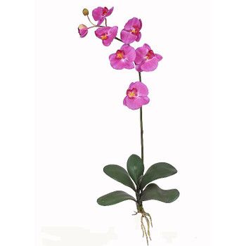 Phalaenopsis Silk Orchid Flowers (6 Stems) - Orchid