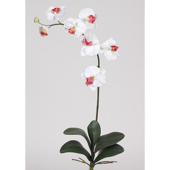Phalaenopsis Silk Orchid Flowers (6 Stems) - White