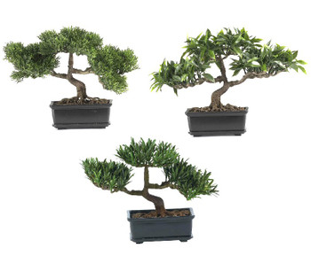 "12"" Bonsai Silk Plant Collection, Set of 3"
