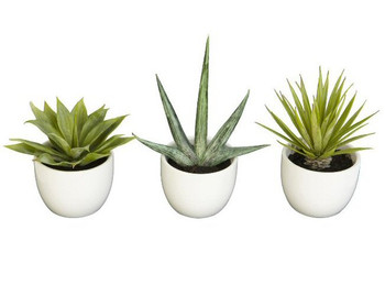 Southwest Agave Silk Plant Collection, Set of 3