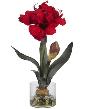 Amaryllis with Round Vase