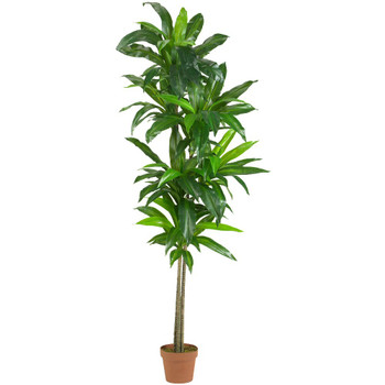 6' Real Touch Dracaena Silk Plant