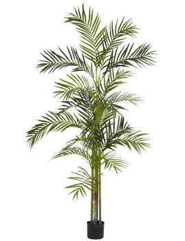6' Tall Areca Palm Silk Tree