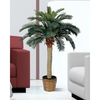 4' Sago Silk Palm Tree