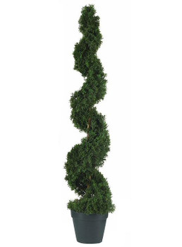 4' Cedar Spiral Silk Tree, Indoor Outdoor
