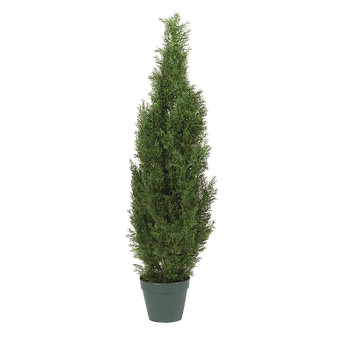 4' Cedar Silk Tree, Indoor Outdoor