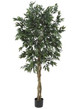5' Smilax Tree