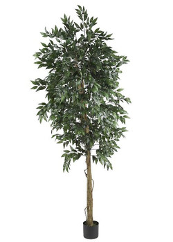 6' Smilax Tree