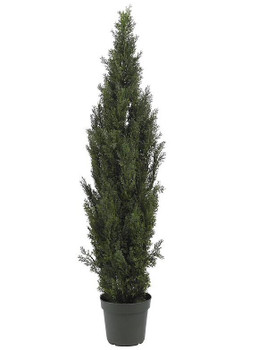 6' Mini Cedar Pine Tree, Indoor Outdoor