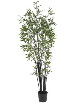 6' Black Bamboo Silk Tree with Two Thick Trunks