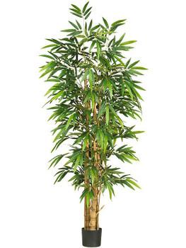 6' Belly Bamboo Silk Tree
