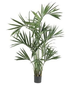 6' Kentia Palm Silk Tree