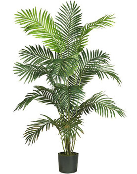 6' Paradise Palm Silk Tree
