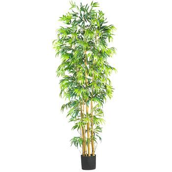 7' Multi Bambusa Bamboo Silk Tree
