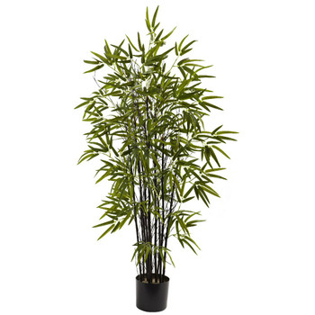 4' Black Silk Bamboo Tree