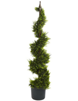 4' Cypress Spiral Silk Tree