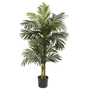 5' Golden Cane Silk Palm Tree