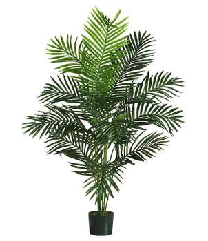 5' Paradise Palm